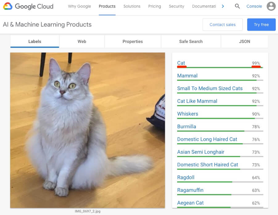 تسست تصویر گربه در Google's Cloud Vision API